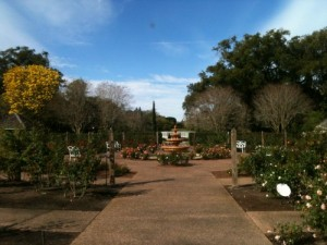 The rose garden at Leu Gardens is always in bloom.