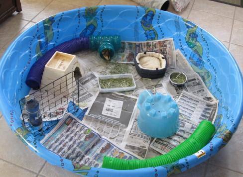 Doggone orlando guinea pig cages archives doggone orlando for How to make a guinea pig bed