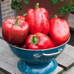 Red bell peppers add flavor to the fritters (Photo: BonniePlants.com)