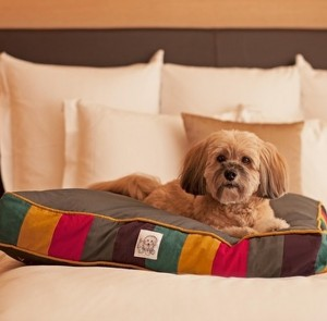 Fido looks pretty content in this plush bed, right?