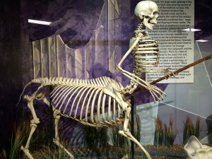 skeleton centaur