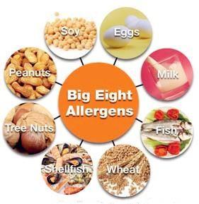 big 8 allergens