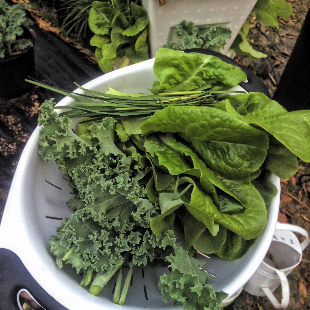 orlando urban yogini garden of vegan easy hydroponics for